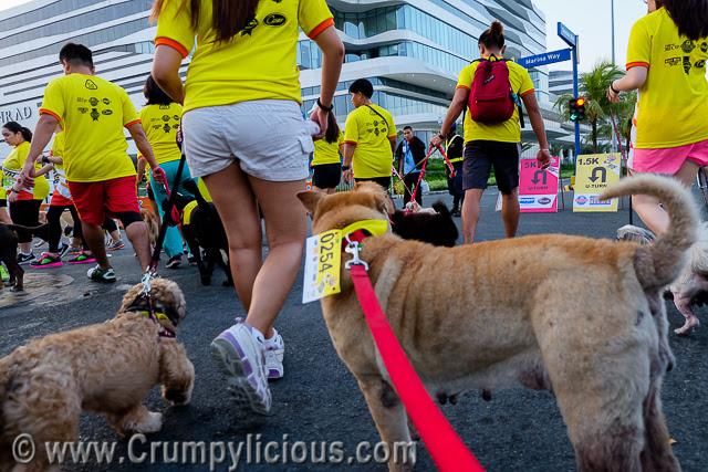 pet express doggie run 2016