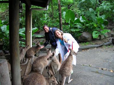 Canguros, Cairns Tropical Zoo, Cairns, Australia, vuelta al mundo, round the world, La vuelta al mundo de Asun y Ricardo