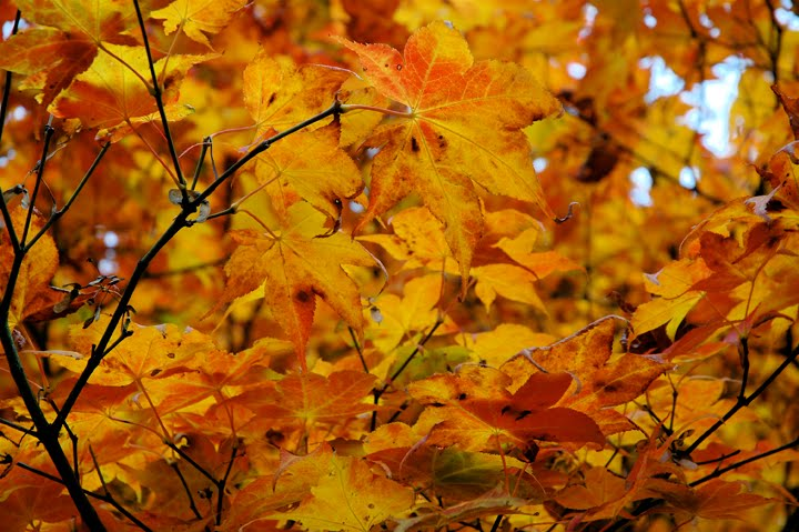 Autumn leaves essay