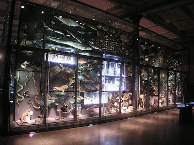 Die große Wand der Artenvielfalt als ästhetisches Erlebnis im Museum für Naturkunde Berlin. Die Wand besteht aus 3000 Einzelobjekten und ist Teil der aktuellen Ausstellung Darwin - Reise zur Erkenntnis (© Museum für Naturkunde)