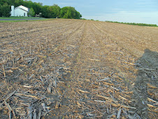 The Corn is UP but Cautious