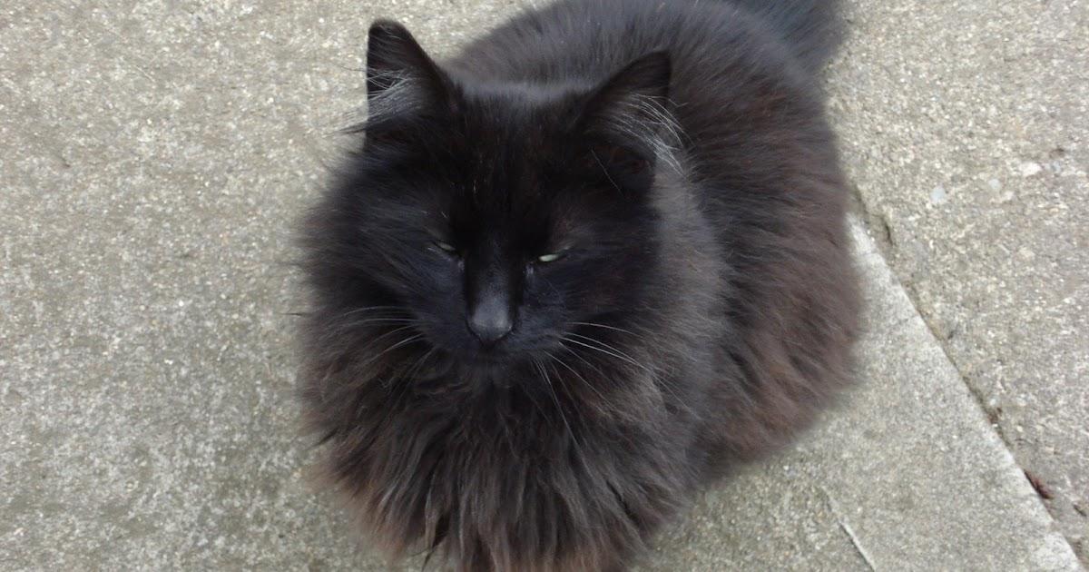 Cats Eyes Matted Shut