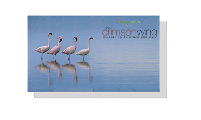 Création du label Disneynature DN+Crimson+Wing