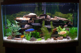 How to Set Your Fish Tank Effectively