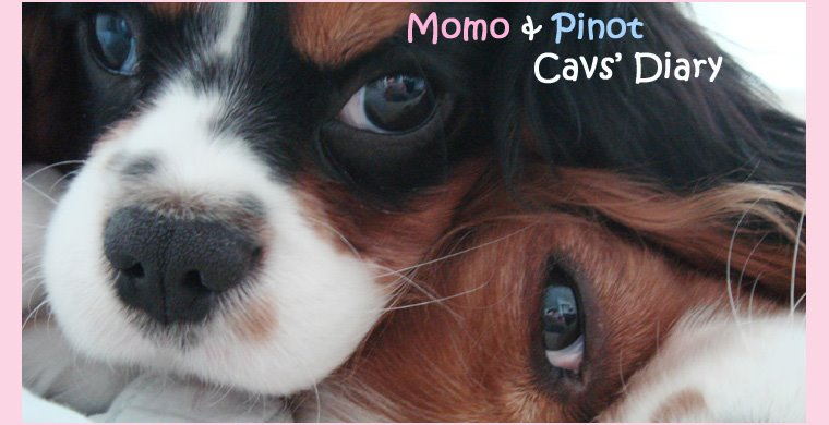 Momo & Pinot - The Cav's Diary (JP) Copyright 2009 -- On Break since May 2007 :D
