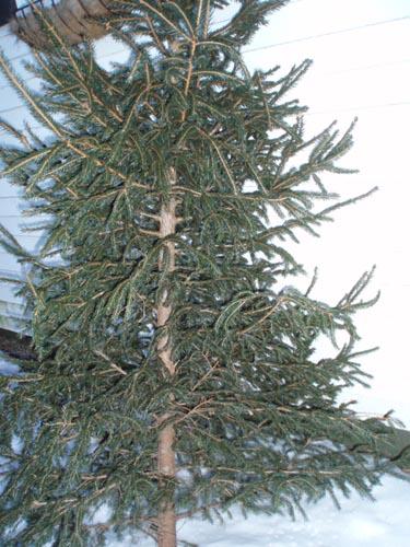 Sparse Christmas Tree Artificial.Sweetmeadowsfarmhappenings One Very Ugly Christmas Tree