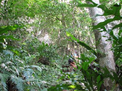 Banadero Forest