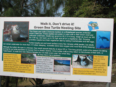 Green Sea Turtle Education Sign