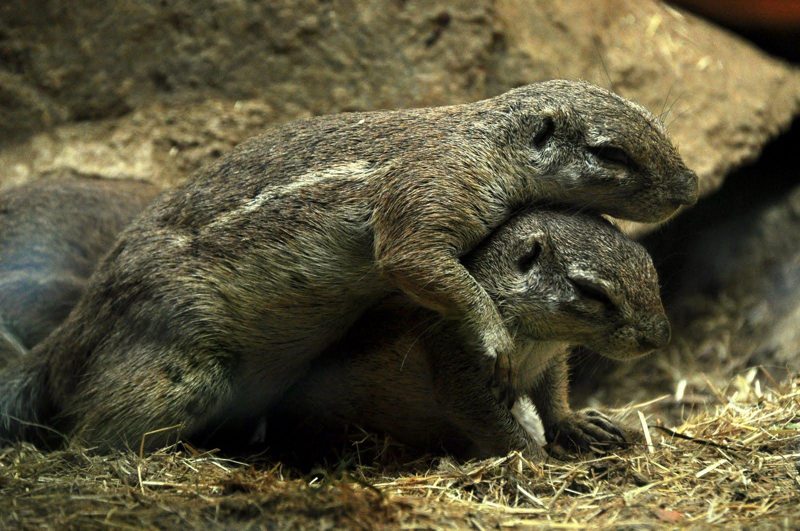 Olivary Olio: 動物園.爆可愛的黃鼠狼