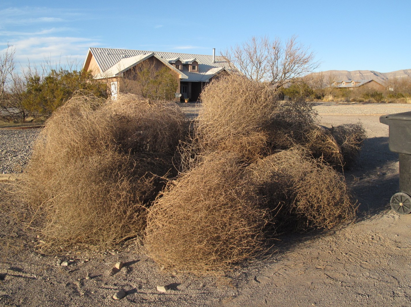 Clayworks By Kim Detmers: FREE Tumble Weeds