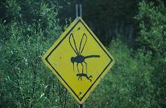 Los mosquitos están terribles