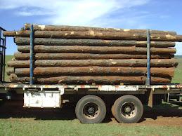 Carga de Toras de pinus