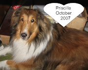 Our Sheltie