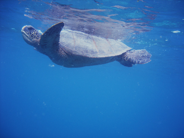 [Turtle+(from+Jenn]
