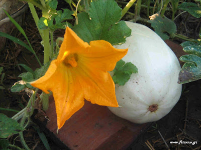 http://1.bp.blogspot.com/_-Vb33Tj_lpo/S2h-QaZd_HI/AAAAAAAABbA/dEUPxW2ehxw/s200/Pumpkin+vegetable+spaghetti+with+flower.jpg