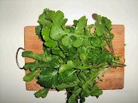 Ρόκα (Αζούματο)-Eruca sativa