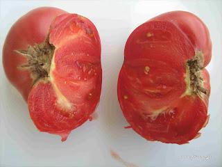 Ντομάτα - Brandywine
