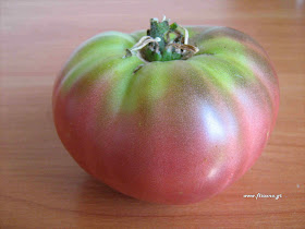 καλλιέργεια ντομάτας