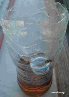 Οικολογικές παγίδες για έντομα από πλαστικά μπουκάλια