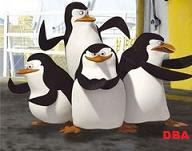 Pinguins DBAs