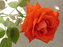 another rose that blooms to usher the year out