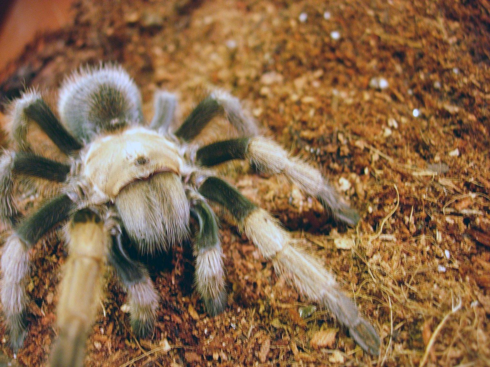 [tarantula2.JPG]