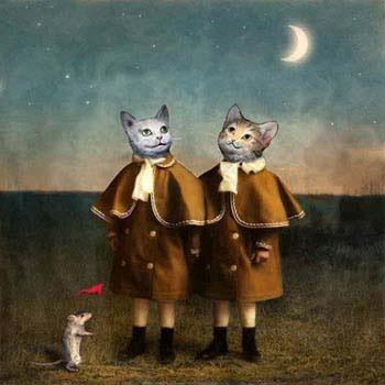 MTdistracted_cats