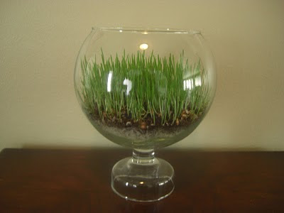 grass terrarium how to
