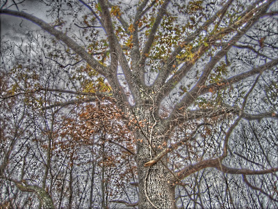 HDR of a tree made in qtpfsgui. Picture taken sometime in november.