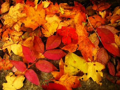 fall wallpaper leaves seasons