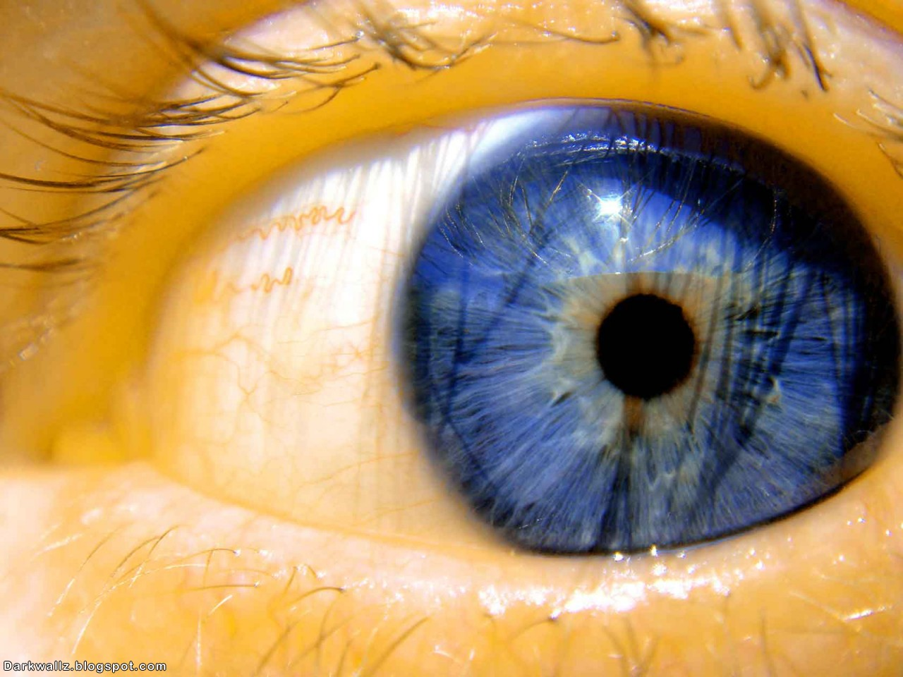 Photograf creepy wallpapers - Scary yellow eyes ...