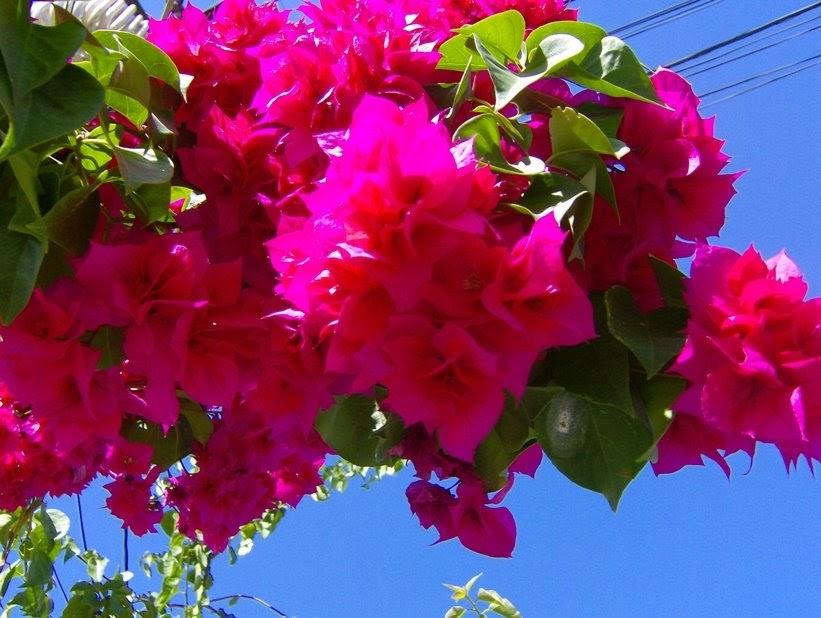 Il giardino delle esperidi fiori profumi e simboli dell for Giardino fiori