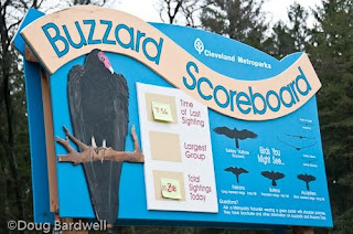 Buzzard fans flock to Hinckley, Ohio for annual return of the buzzards