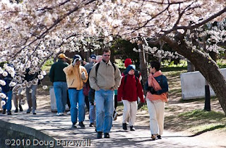 Plan your trip now for cherry blossom time in Washington, DC