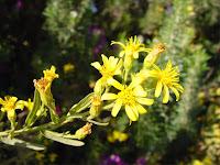 flower anggrek