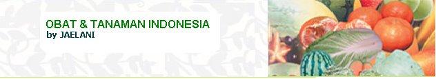 Obat & Tanaman Indonesia