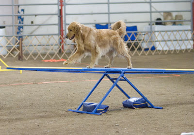 dogs can be trained to skillfully perform tasks