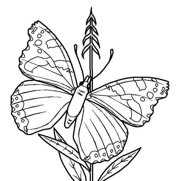 Dibujo De Mariposas Para Imprimir Y Colorear!: Lámina De