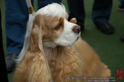 2/27/2007 | Simon in shenzhen dogshow | Click to view more