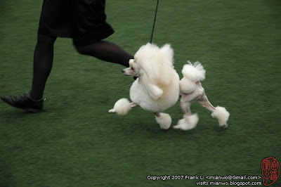 2/27/2007 | Toy group in shenzhen dogshow | Click to view more