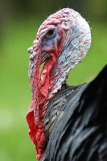 Read More @ Webphemera: What An Ugly Bird!