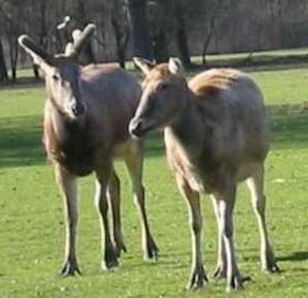 Adam Lee: 謂鹿為馬 -- 成語背後的是是非非