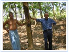 Complete Remedy for Brown Bast on Rubber Trees | agropedia