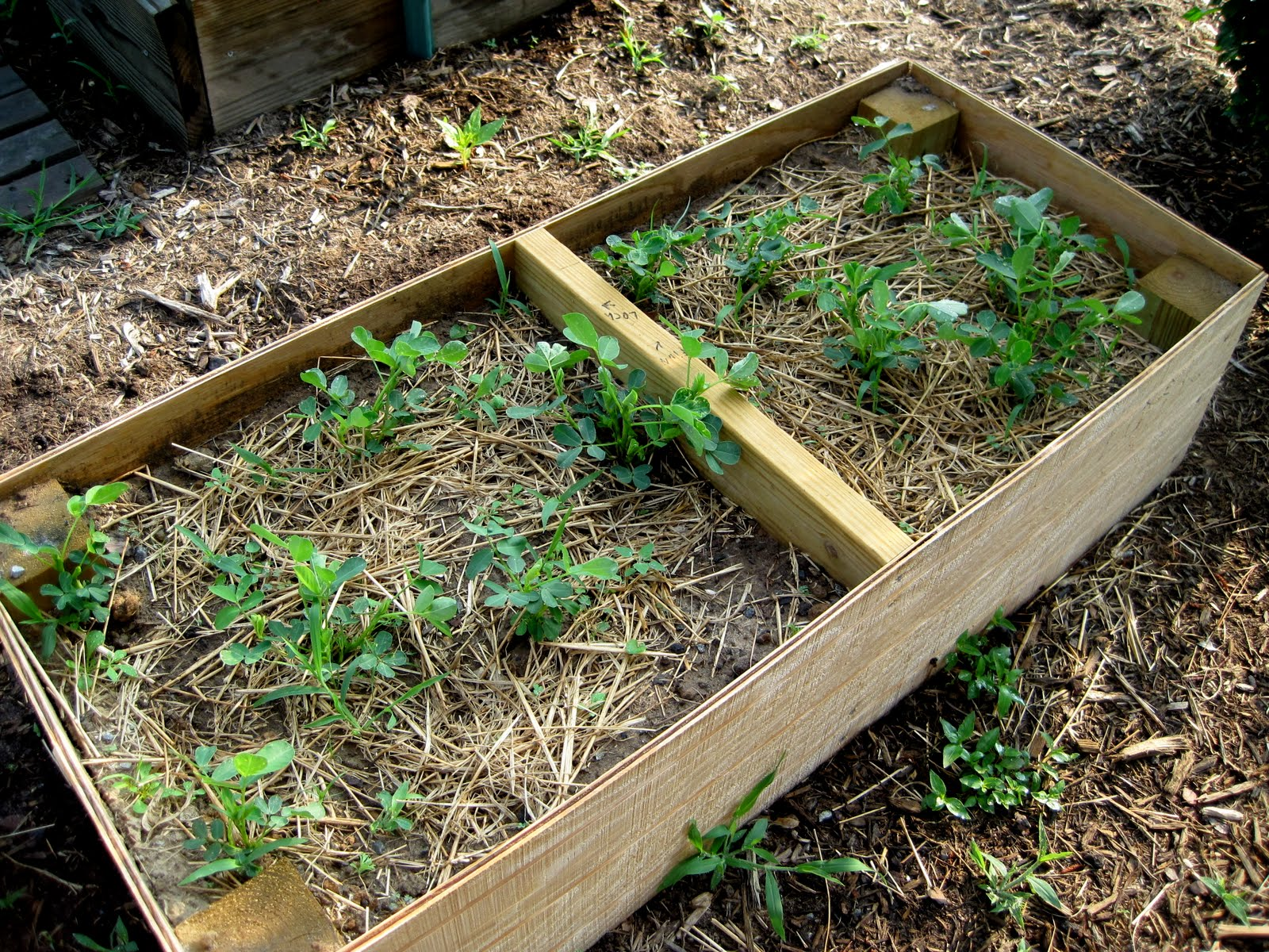 garden now - think later! : kinderGARDENS Week 8 Update - photo#44
