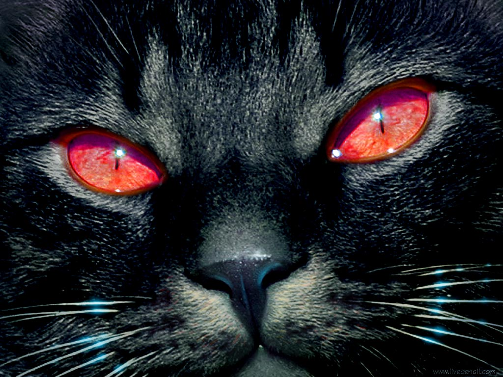 Black Cat With Pink Scary Eyes: Cats Lover: Black Cats' Myths And Beliefs