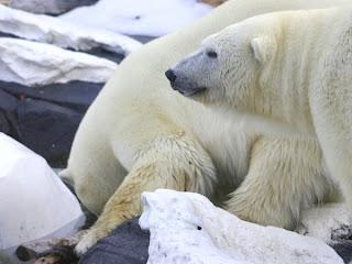 زياره الى القاره القطبيه