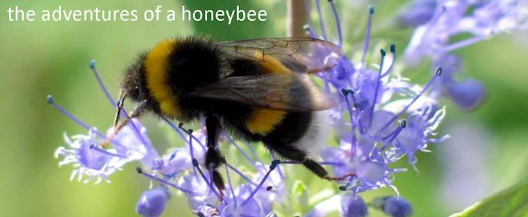 The Adventures of a Honeybee