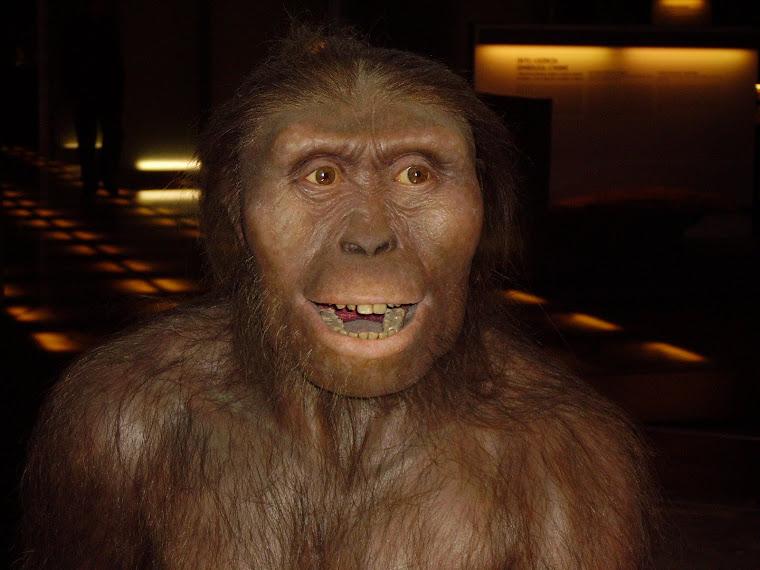 Del astralopithecus afarensis (Padre de Lucy)