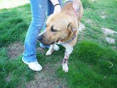4/8/10 Dog Shot KY. Need Donations and Rescue. Good Natured Dog.