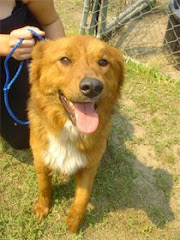 5/3/10 Beautiful Retriever Mix scheduled for euth May 1. Beyond Urgent.  Please contact Esther ASAP